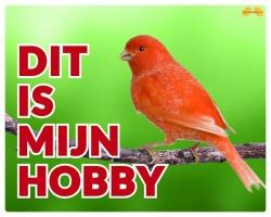 https://www.dierenspullen.shop/mwa/image/meerinfo/Kanarie-oranje.jpg