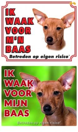 https://www.dierenspullen.shop/mwa/image/meerinfo/Miniatuur-Pinscher-bruin.jpg