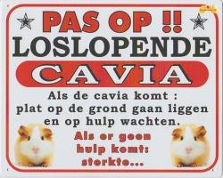 https://www.dierenspullen.shop/mwa/image/meerinfo/kl_loslopende_cavia.jpg