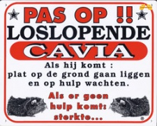 Pas op!! Loslopende Cavia