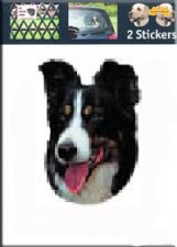Kop Border Collie