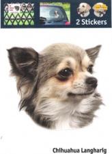 Kop Chihuahua Langharig