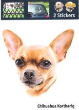 Kop Chihuahua Kortharig