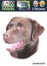 Kop Labrador bruin