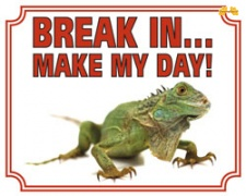 Break in make my day Leguaan