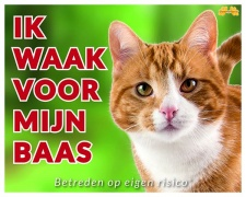 Ik waak voor mijn baas Rode kat