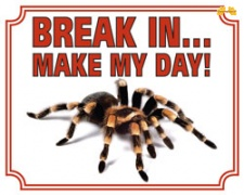 Break in make my day Tarantula