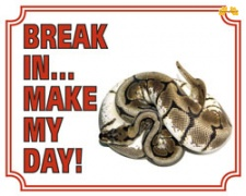 Break in make my day Tijgerpython